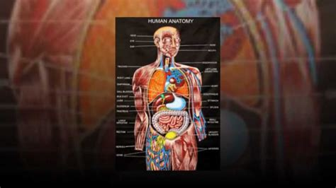 Essentials of Human Anatomy & Physiology - YouTube